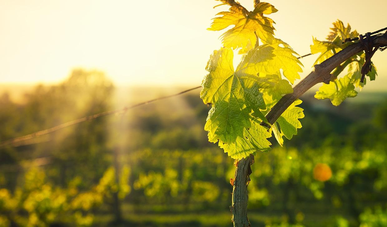 Stevig,-Zacht-en-Romig-Wijnpakket