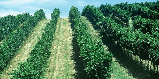 Wijnverhaal Costadoro Montepulciano-Sangiovese Rosso Piceno Superiore 2