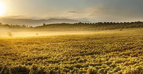 Wijnverhaal Nuragus 2