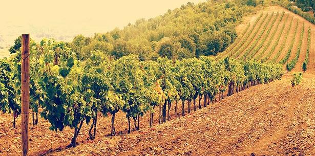 Wijnverhaal Susumaniello - 2