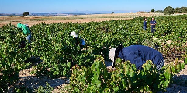 Wijnverhaal Tintoralba Selection - 2