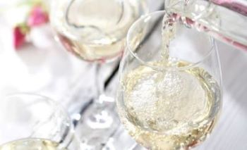 Pinot Grigio kopen