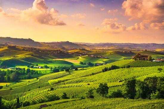 populaire druivenrassen rode wijn