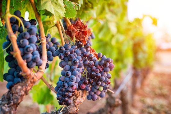 Italiaanse rode wijn Barolo