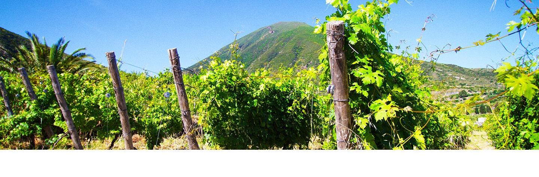 nero d'avola wijn