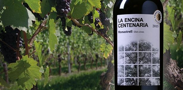 Wijnverhaal La Encina Centenaria 1