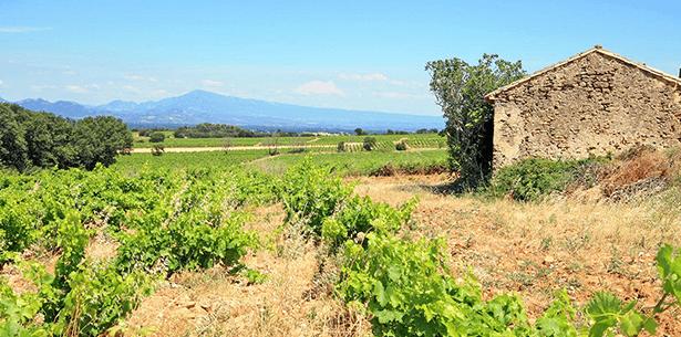 Wijnverhaal Cantine Castignano Sangiovese 1